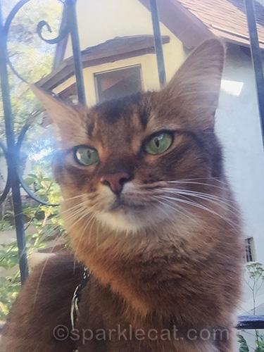 somali cat selfie on bridge