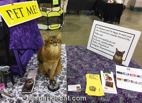 somali cat in Pet Me cat area at cat show
