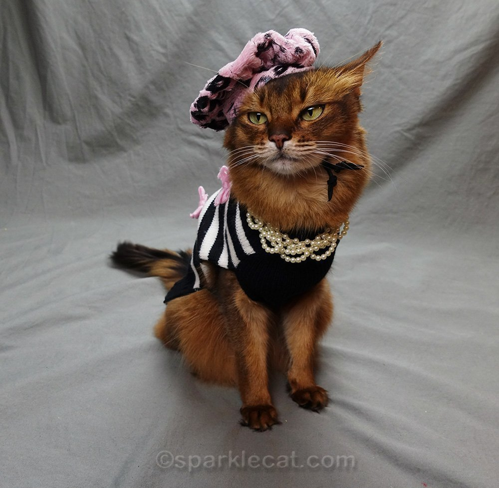 somali cat with retro sweater, pearls and beret