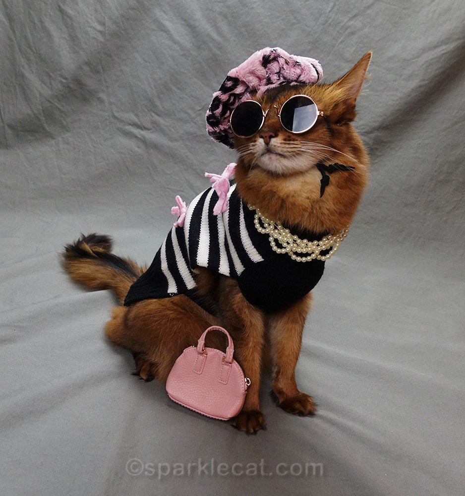 somali cat posing in hep cat outfit