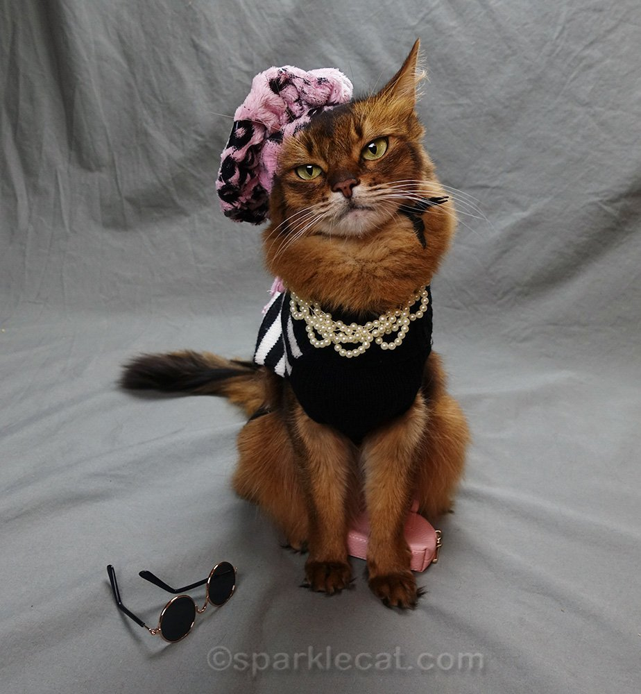 somali cat with accessories askew