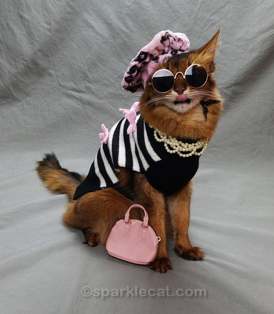 Somali cat dressed as a French hipster