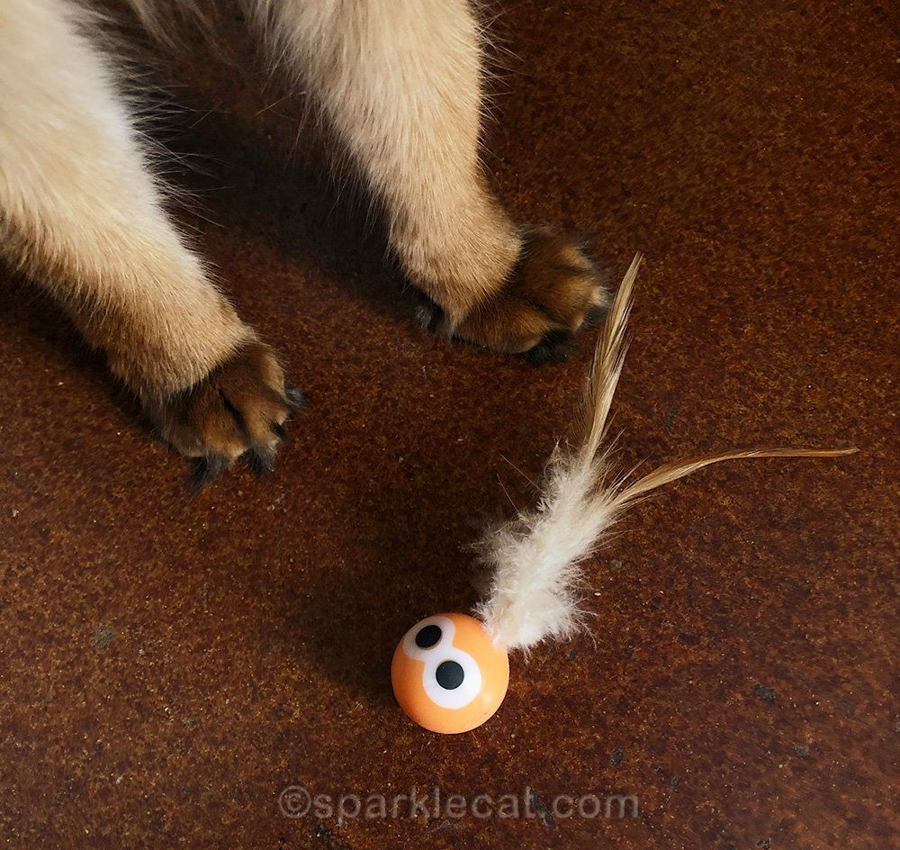 cat toy sitting at somali cat's feet