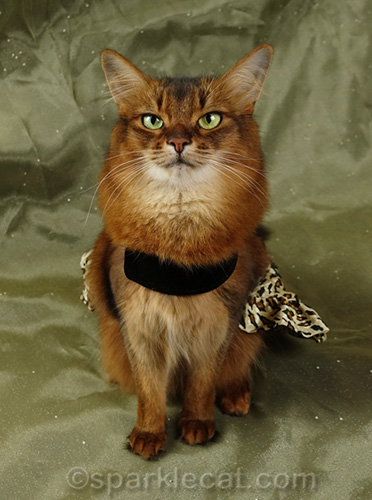 somali cat model in velvet and leopard print dress
