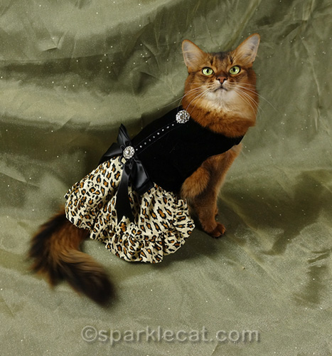 somali cat modeling fancy cat dress