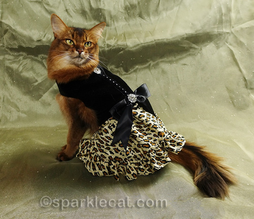 somali cat modeling fancy cat dress from a different angle
