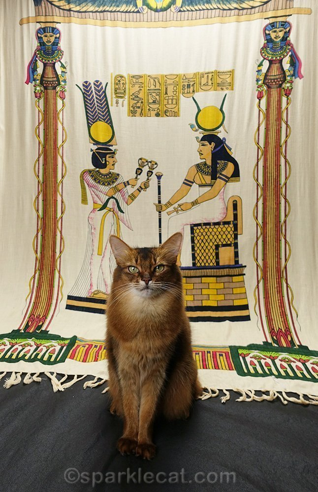 somali cat in front of an Egyptian backdrop