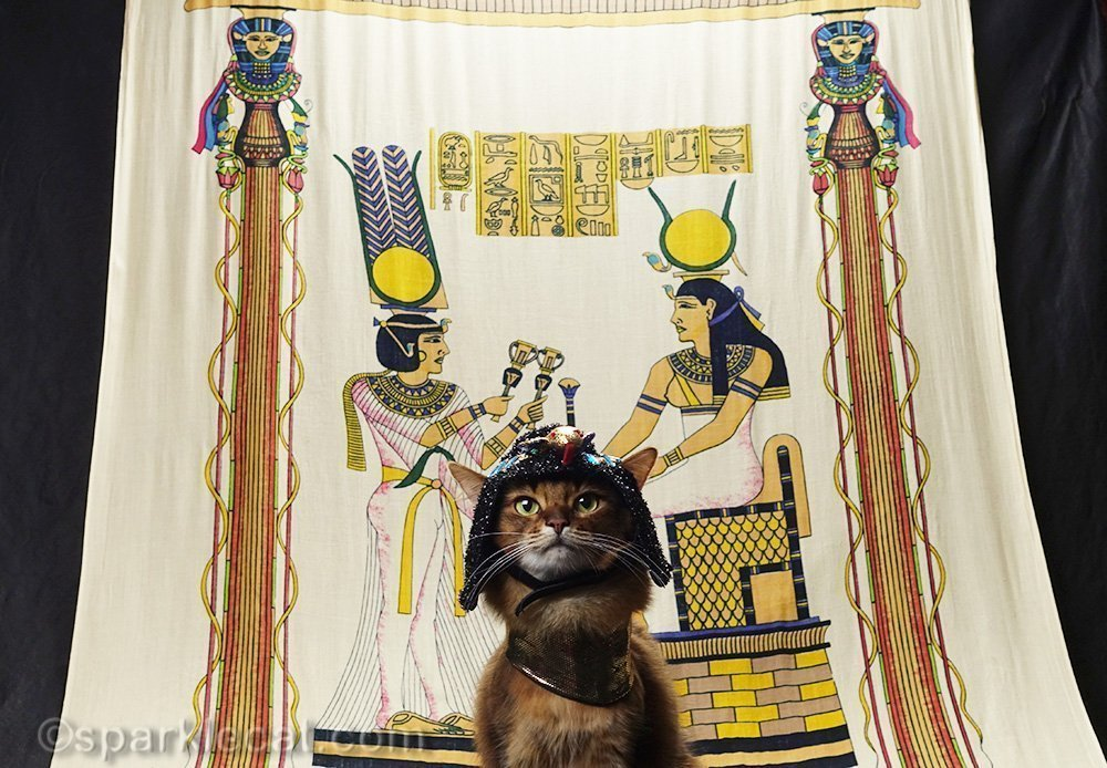 dramatic angle of somali cat in Egyptian costume