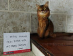 National Pet Month and the Awesome Things We Kitties Do for You #PetPraising