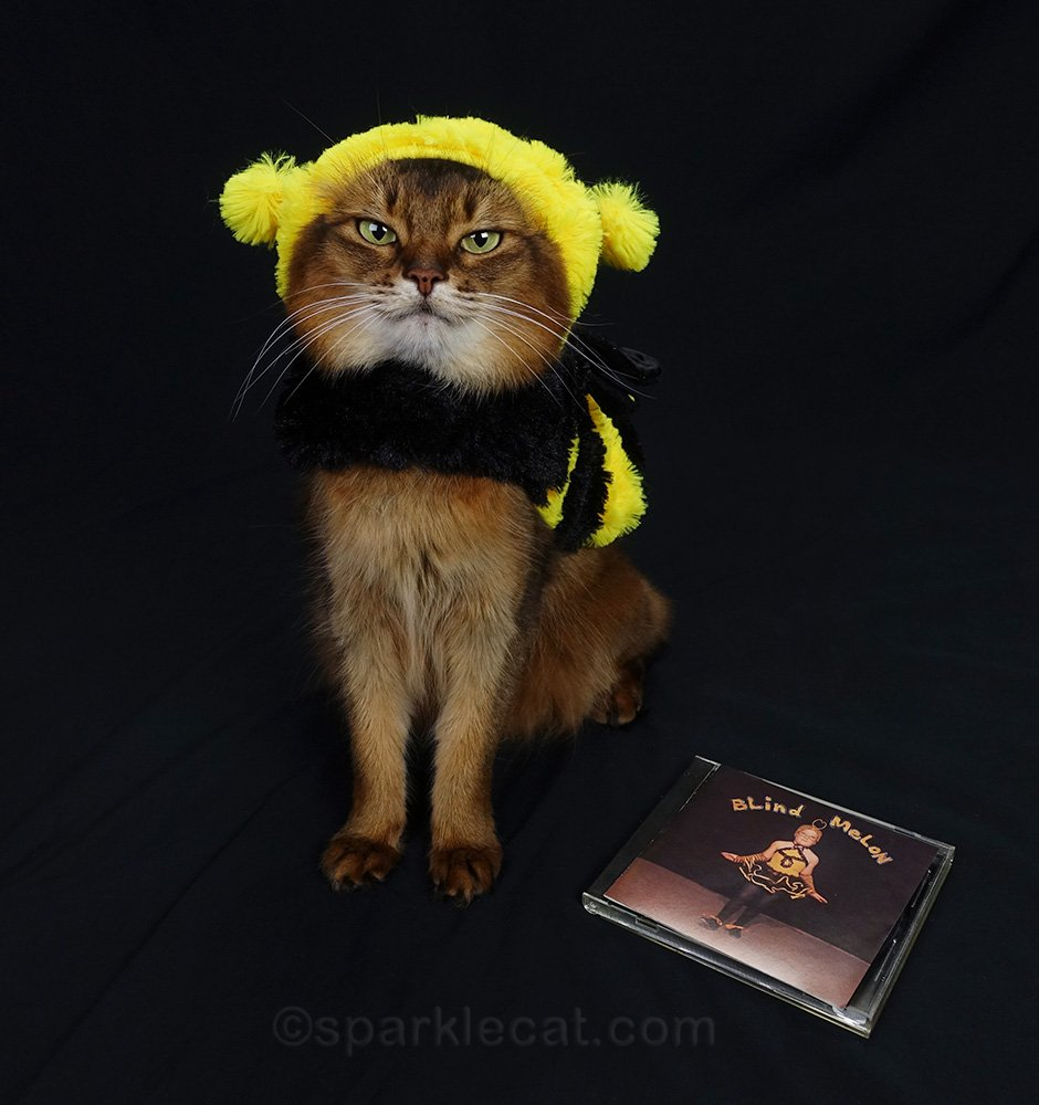 somali cat wearing bee girl costume with Blind Melon album