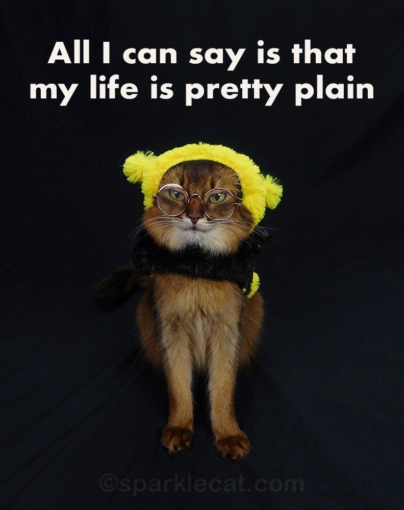 somali cat with bee girl Blind Melon meme