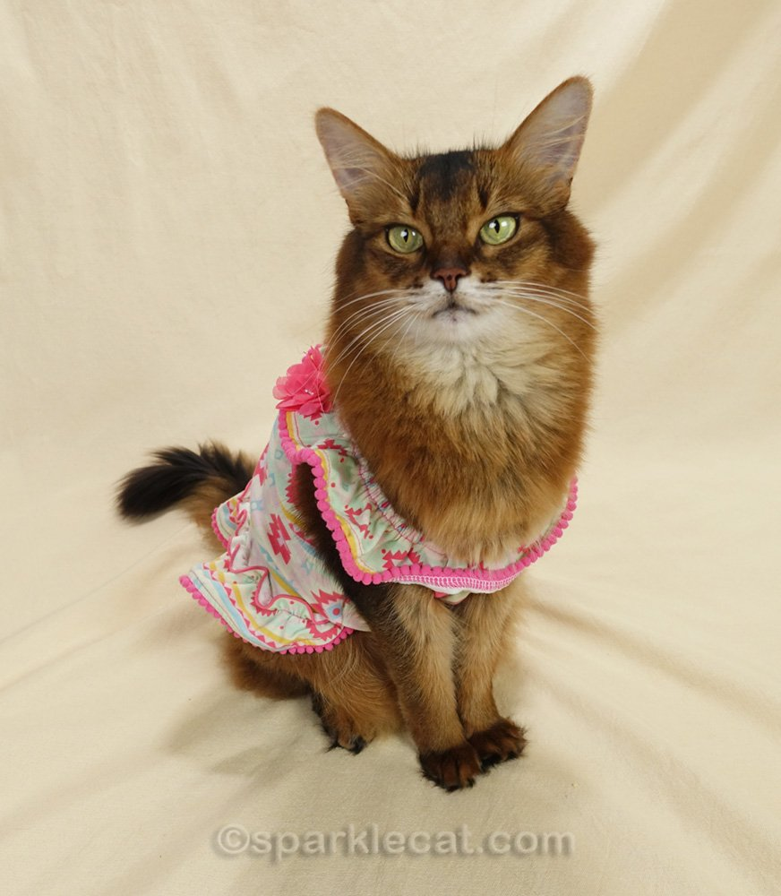 Somali cat in Mexican patterned dress