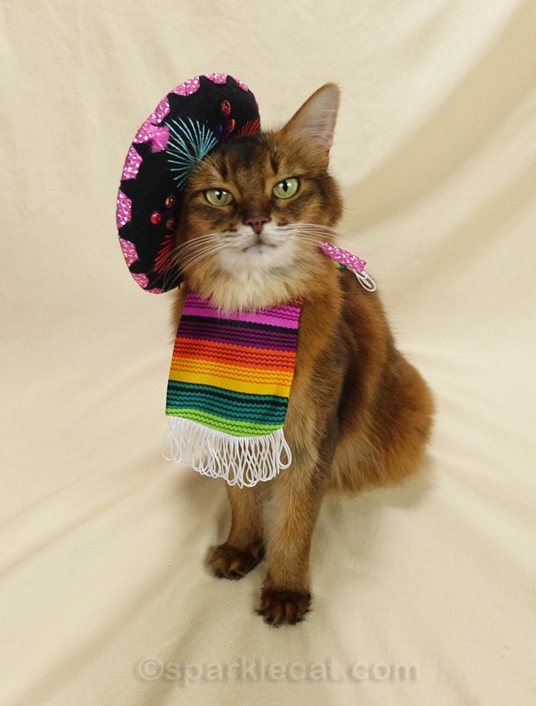 Somali cat in tiny sombrero and a tinier serape