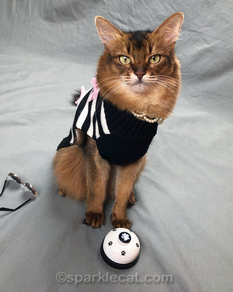 somali cat in fashion sweater with bell to ring