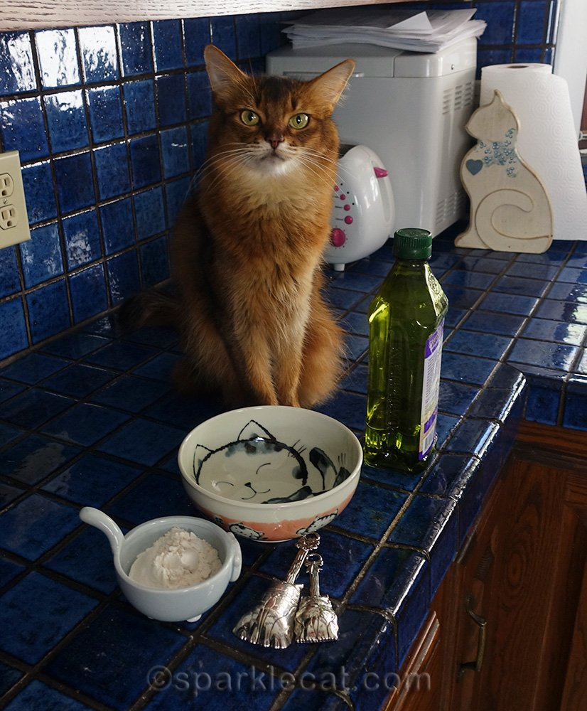 somali cat ready to help make homemade flour tortilla for one
