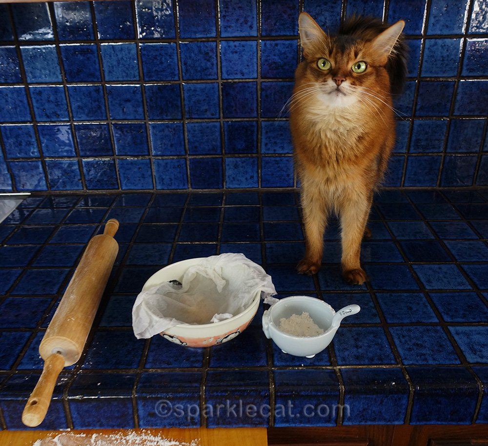 somali cat with dough for homemade flour tortilla, ready to roll out.