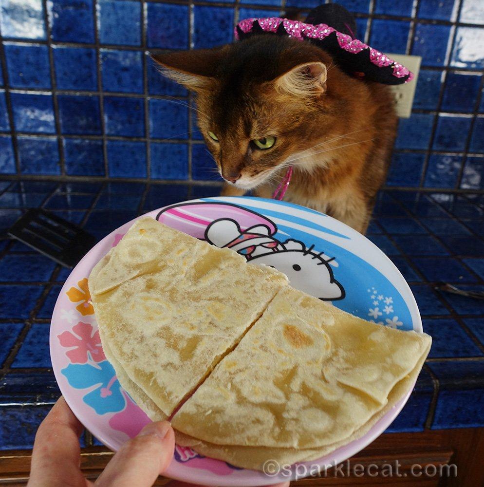 somali cat checking out cheese quesadilla