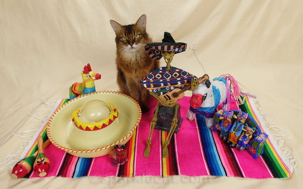 Summer has a cinco de mayo cat party... with some unexpected, and perhaps unwelcome guests.