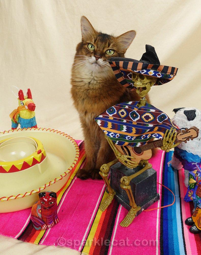 Somali cat with skeleton guitarist in sombrero