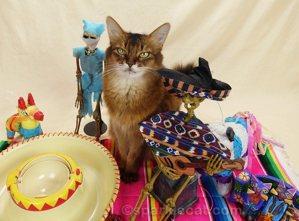 somali cat with skeleton cinco de mayo guests