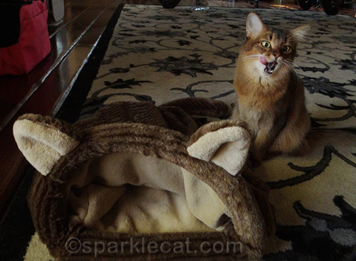 cute kitten posing with cozy kitty sack