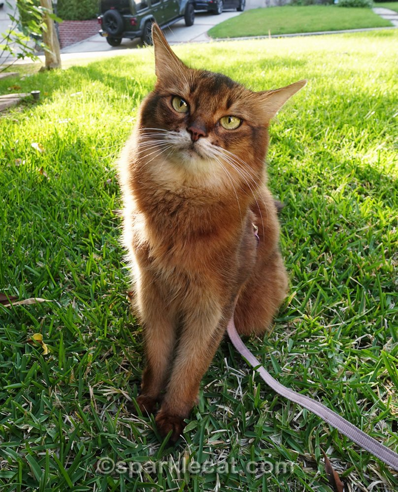 Summer offers some useful tips on how to bring out the best in your cat - helpful suggestions that any cat lover can do.