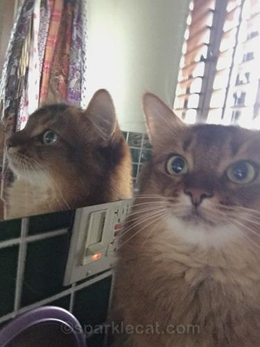 somali cat cuts off her ear in mirror selfie