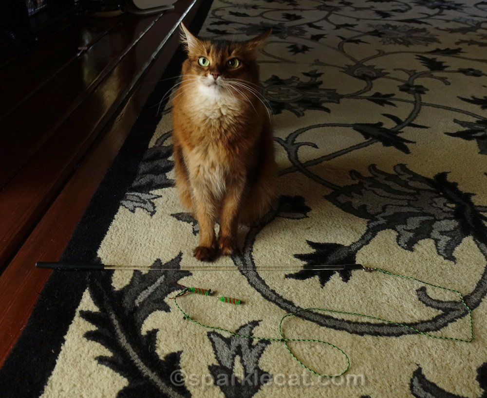 Summer's Cattipeed cat toy is broken! Can it be fixed... or is there another solution?