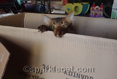 This is the box my castle cat tree came in