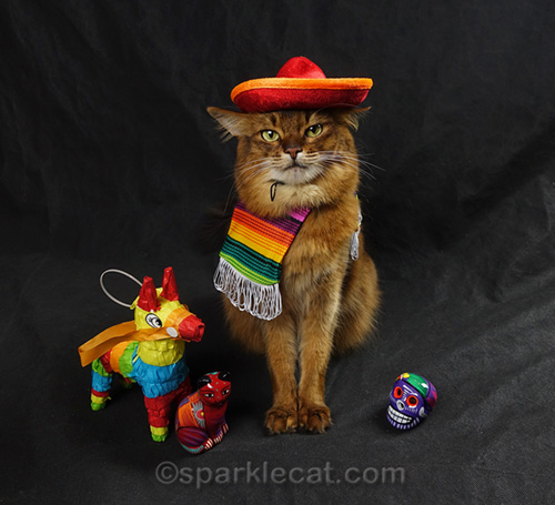 somali cat wearing sombrero and serape on el ocho de mayo