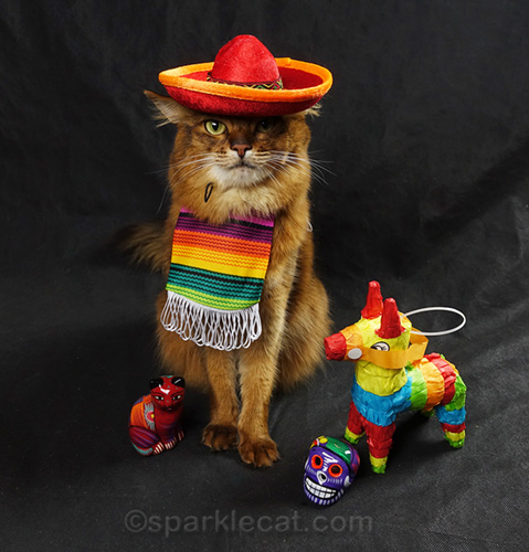 somali cat with sombrero and serape
