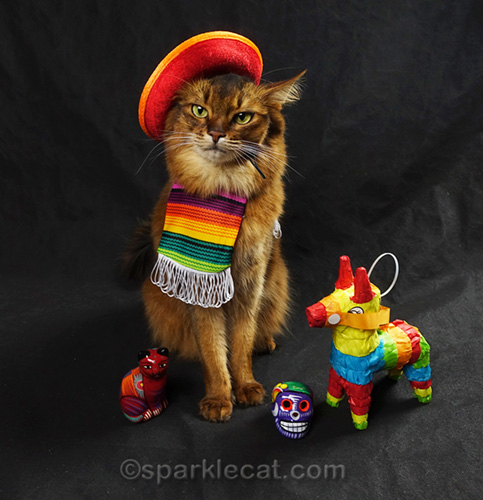 somali cat with sombrero over one ear and crooked serape