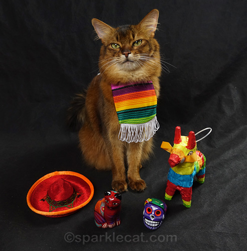 somali cat wearing serape, surrounded by Mexican props
