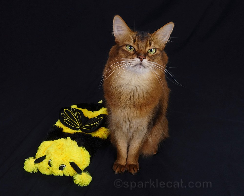 somali cat with bee girl costume