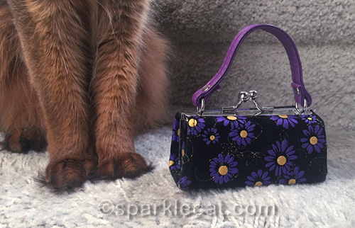 little purse next to somali cat legs