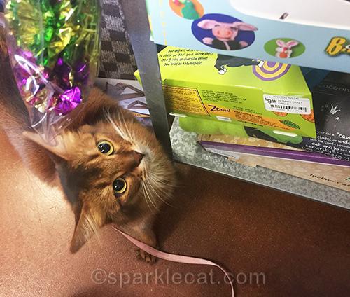 somali cat looking at toys at pet shop