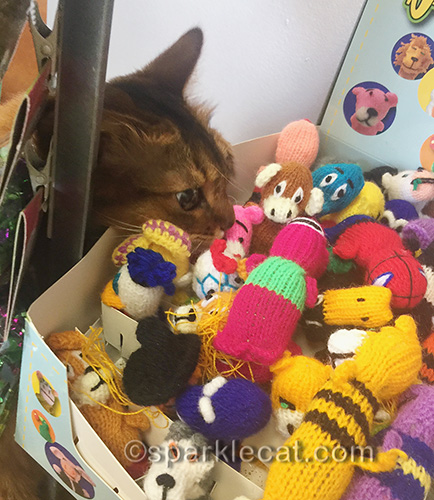 somali cat having a fun shopping excursion