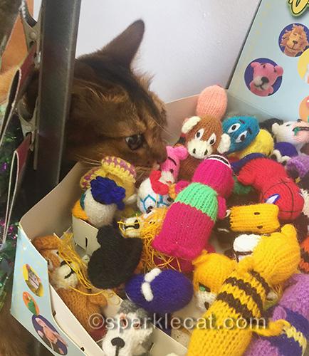 somali cat having a fun shopping excursion