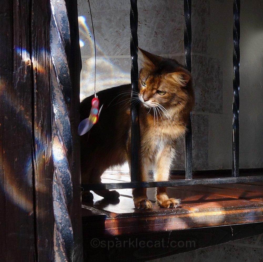 Summer tells her Rompicatz cat toy I'll get you!