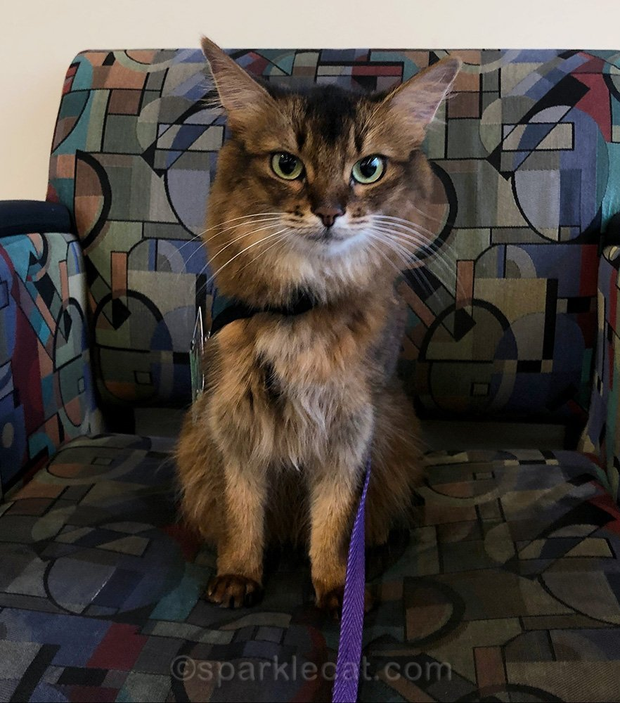 It's kid craziness for Summer on this therapy cat visit