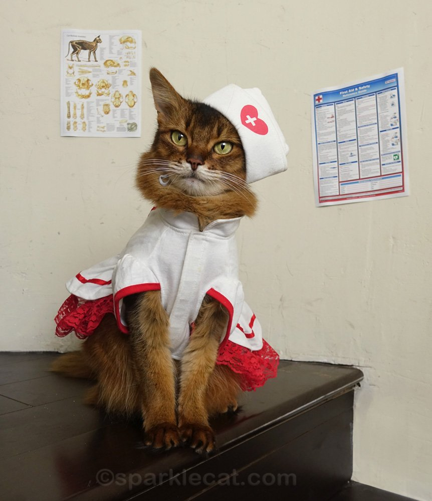 It's National Nurses Week, and Summer gives a therapy cat thank you to all the hard work that nurses do, for patients and more.