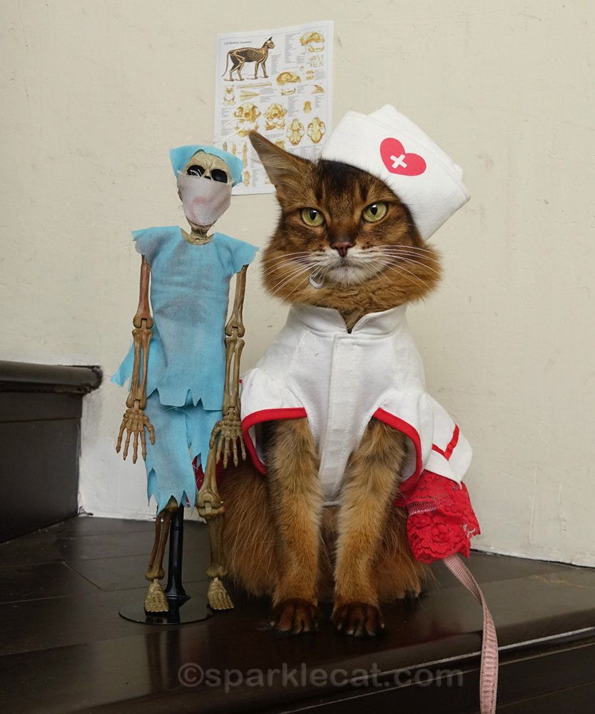 Somali cat in nurse's outfit with skeleton doctor wearing scrubs