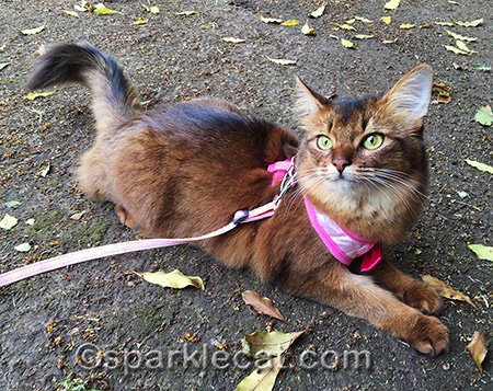 On a harness and leash - and STILL being a kitty!