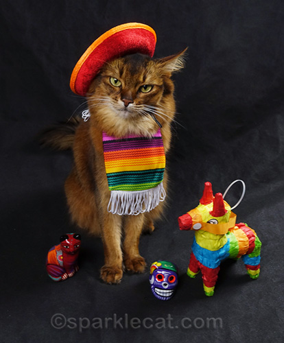 somali cat unsuccessfully trying to own wearing a cat-sized sombrero