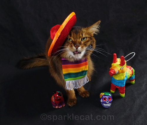Outtakes of Somali cat wearing a sombrero