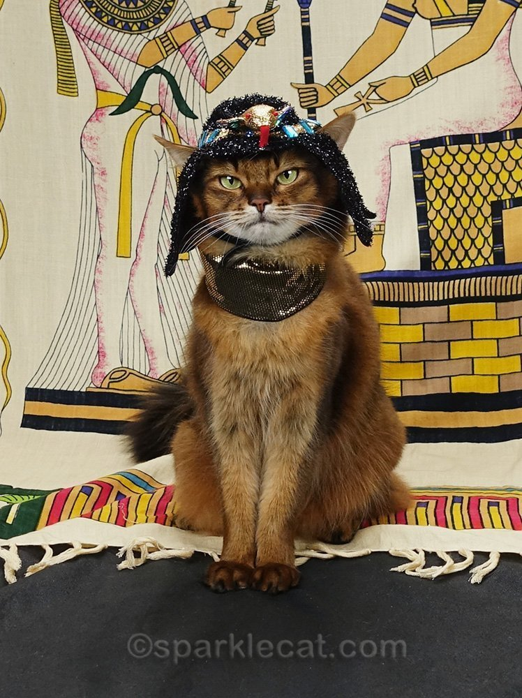 Somali cat dressed as Egyptian cat goddess