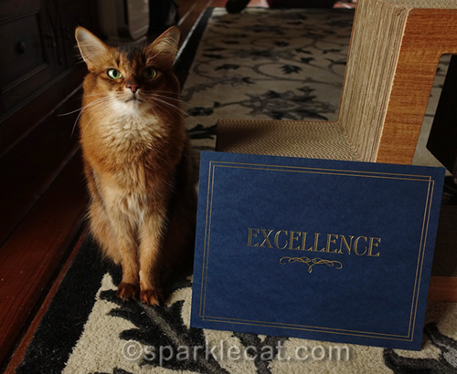 Somali cat with Certificates of Excellence