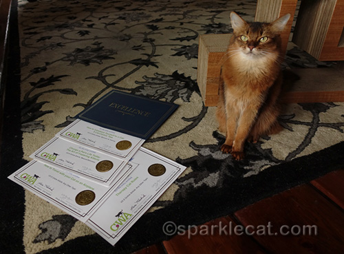 somali cat proudly displaying her four Certificates of Excellence from CWA