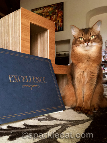 somali cat with Excellence folder