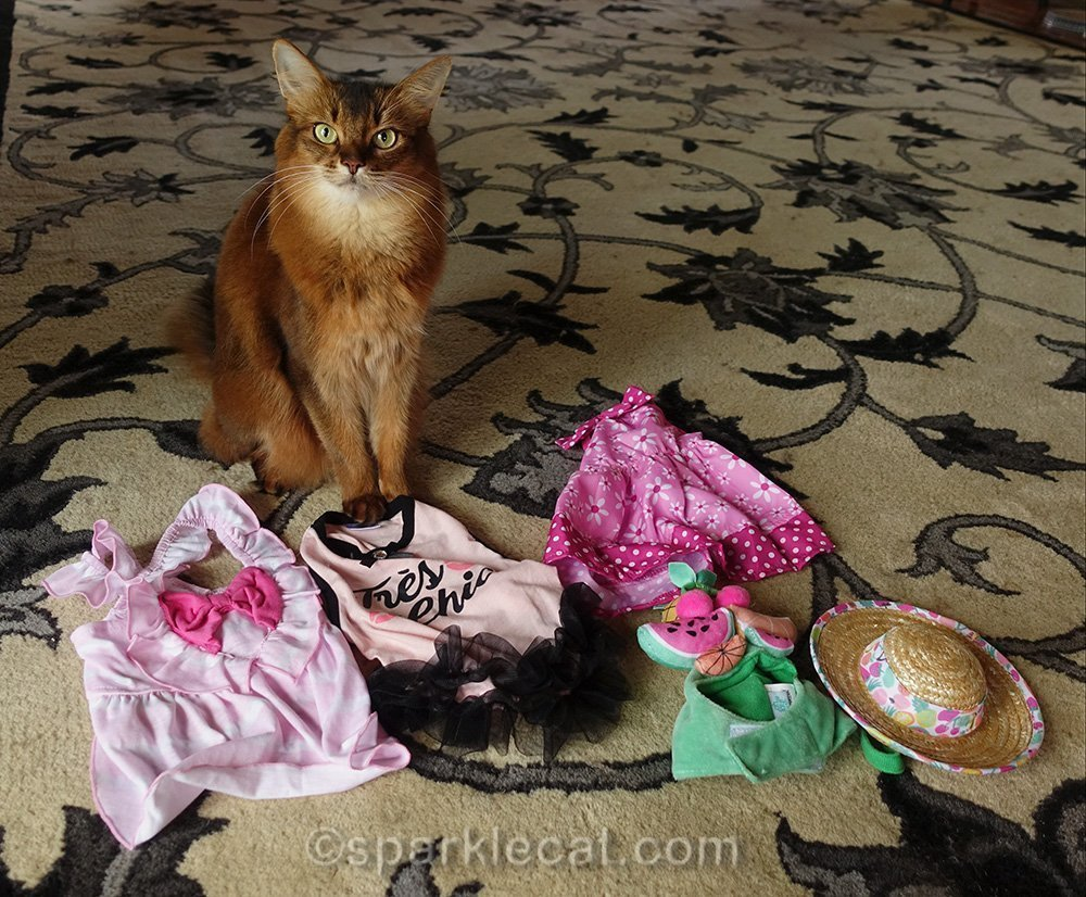 somali cat with new spring fashion